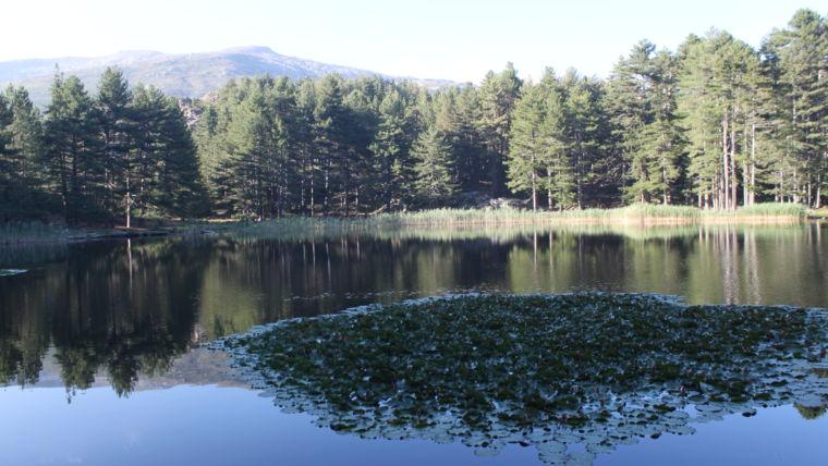 Lac de Creno et ses nénuphars